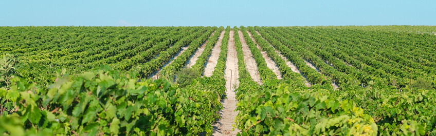 Origen del Vino Espumoso